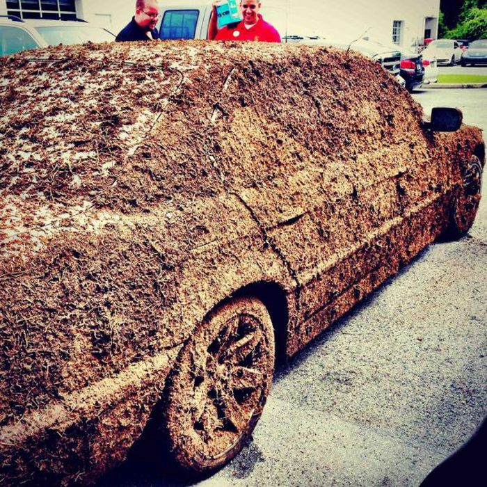 Funny and Interesting Car Photos (50 pics)