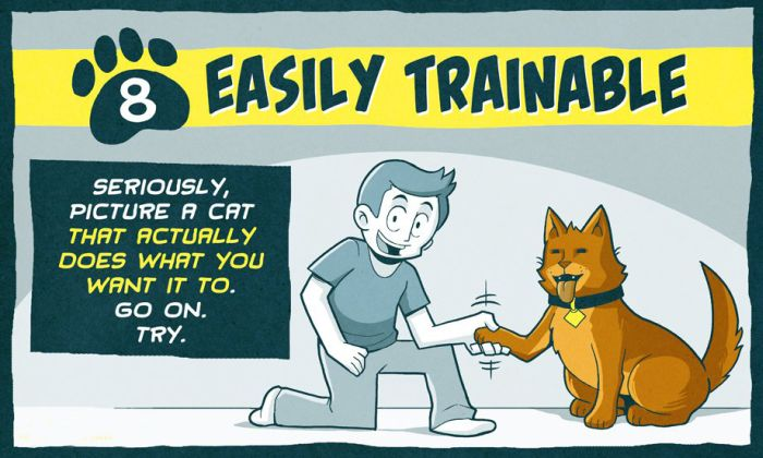 How to Make Cats Better (10 pics)