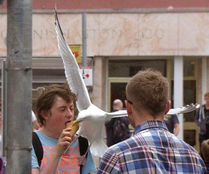 Ice Cream Thief (10 pics)