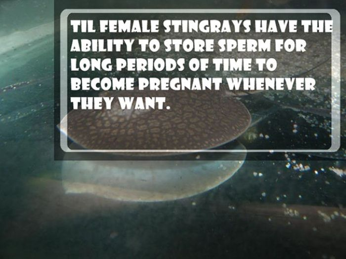 Interesting Facts and Stories (22 pics)
