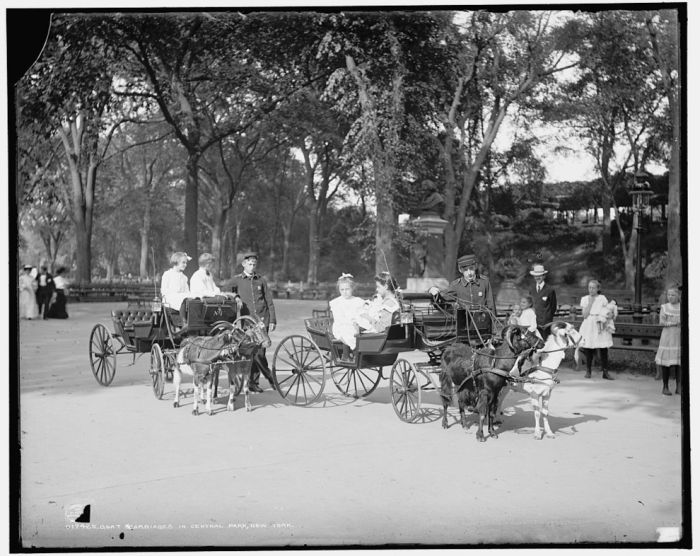 Central Park in the Early 1900s (15 pics)