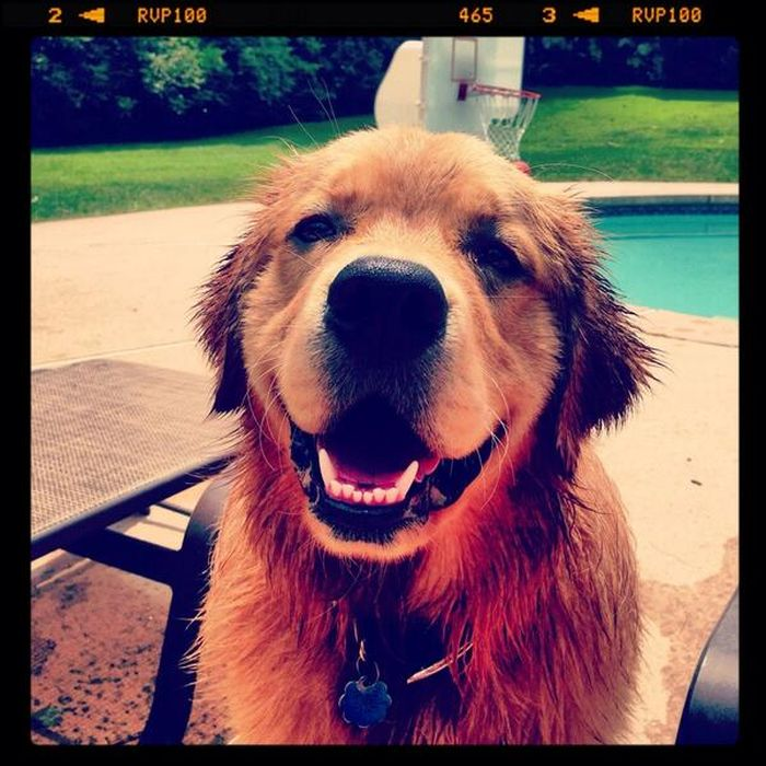 Smiling Pets (63 pics)