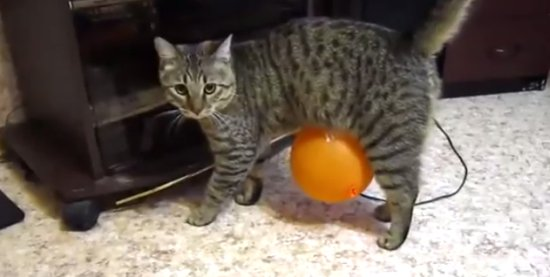 Cat vs Electrostatic Balloon