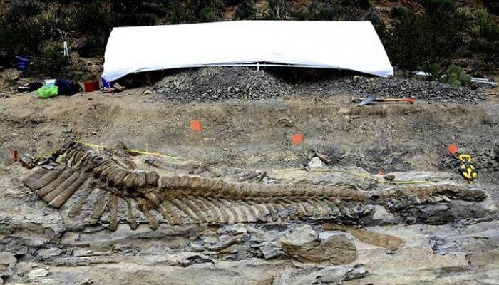 72 Million-Year-Old Dinosaur Remains (7 pics)