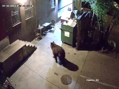 Bear Steals a Garbage Can