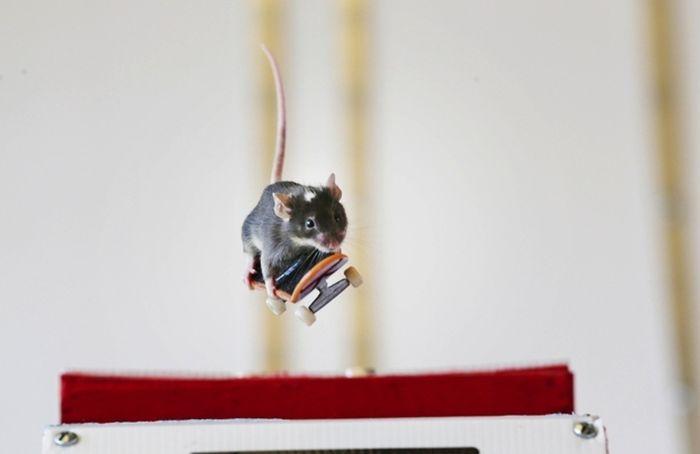 Skateboarding Mice (15 pics)