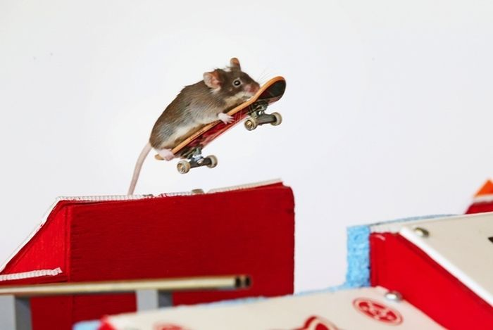 Skateboarding Mice (15 pics)