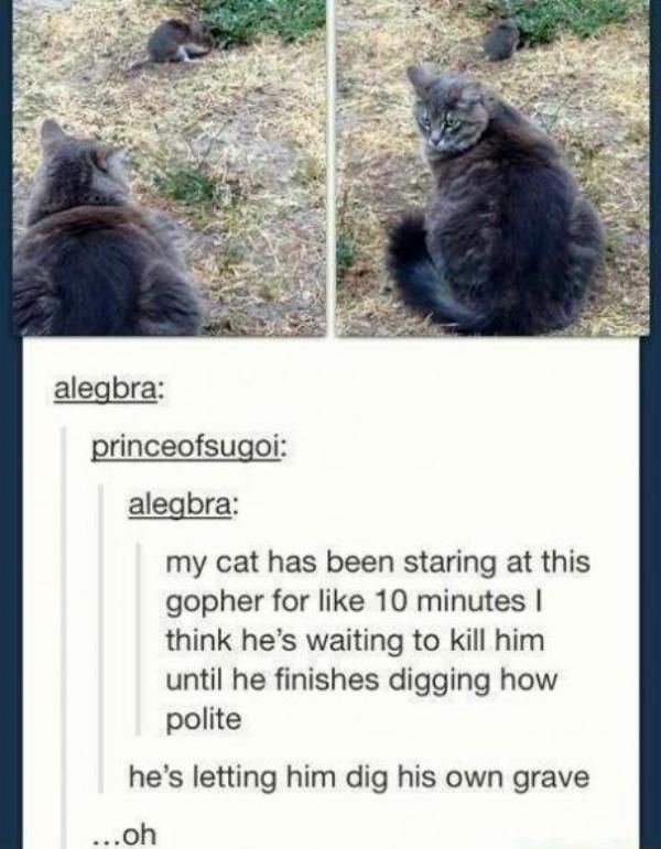 Funny Things Found on Tumblr (40 pics)