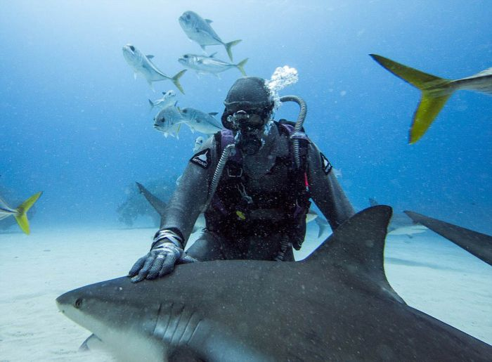 Shark Whisperer Hypnotises Shark (8 pics)