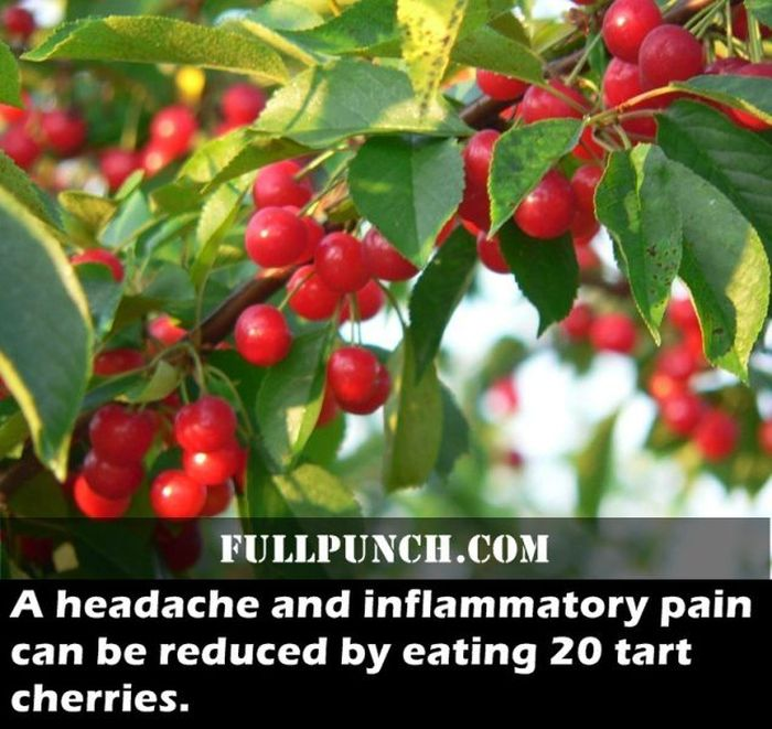 Surprising Health Facts (23 pics)