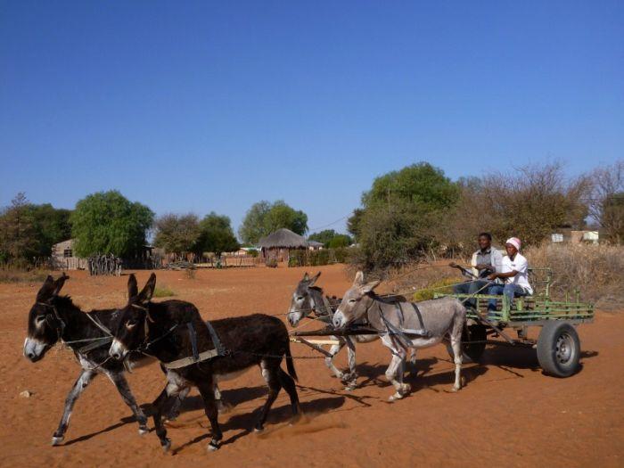 Across Africa (64 pics)