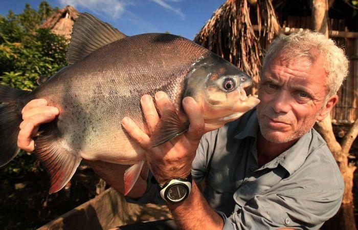 Pacu Fish (7 pics)