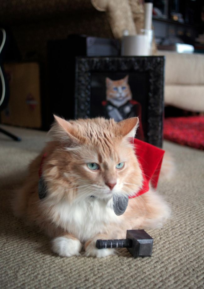 Cat Dressed Up Like Thor (6 pics)
