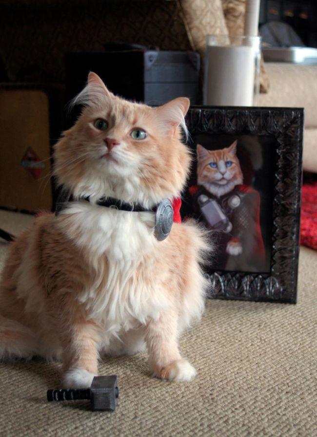 Cat Dressed Up Like Thor (6 pics)