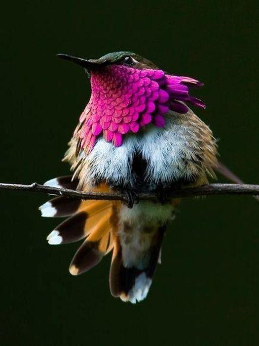 Amazing Animal Photos (63 pics)