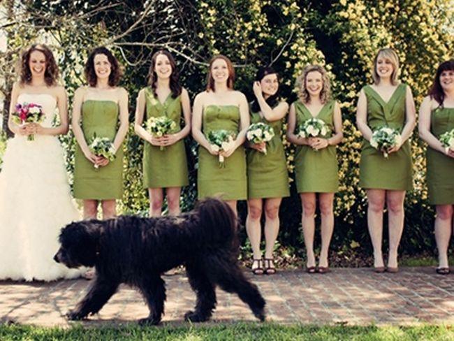 Wedding Photobombs (47 pics)