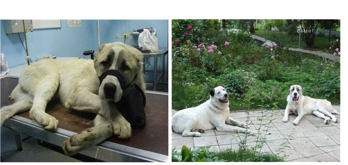 Abandoned Dogs Before and After (28 pics)
