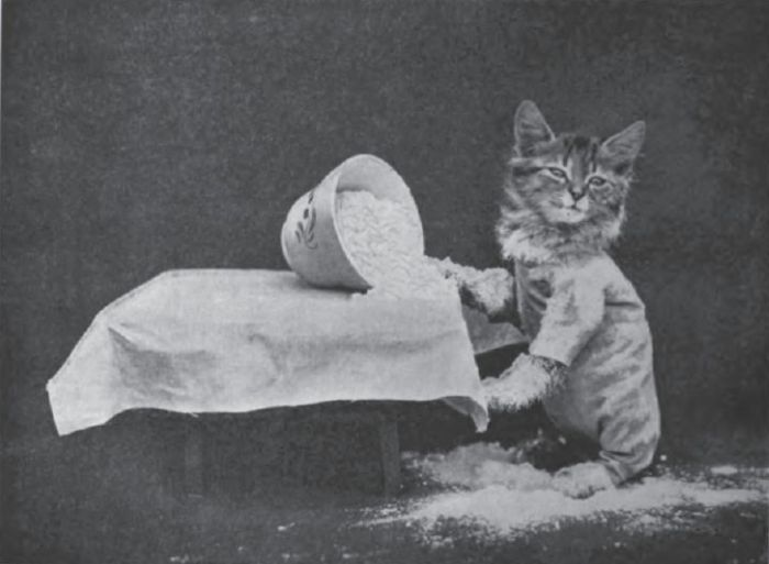Cat and Dog Photos Taken Nearly a Century Ago (37 pics)