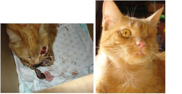 Abandoned Cats Before and After (14 pics)