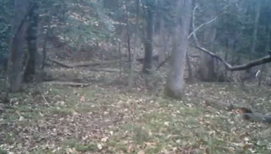 Deer Runs Away From Something