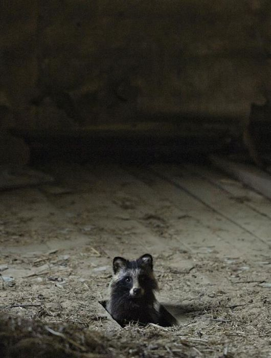 Abandoned House in the Woods Taken Over by Wild Animals (20 pics)