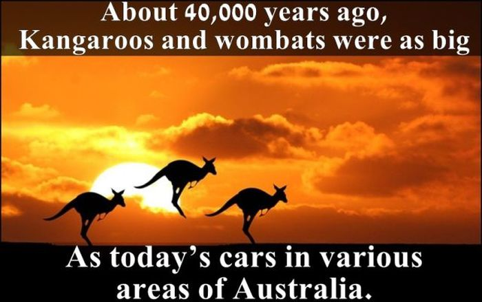 Fun Facts. Part 6 (24 pics)