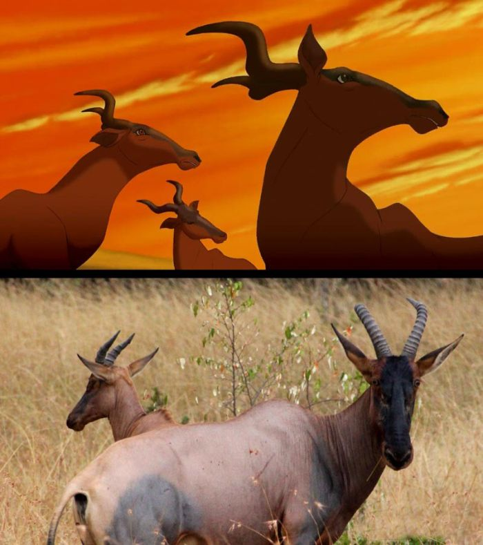 The Lion King in Real Life (9 pics)