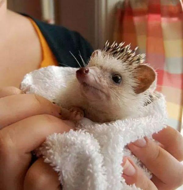 Hedgehog Takes Bath (10 pics)