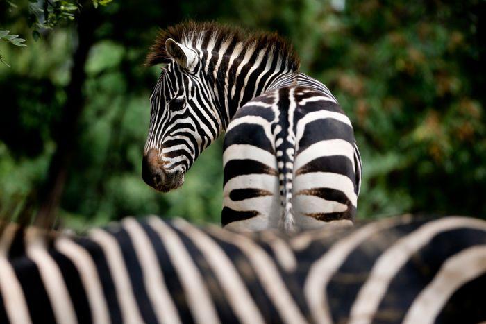 Great Animal Photos (40 pics)