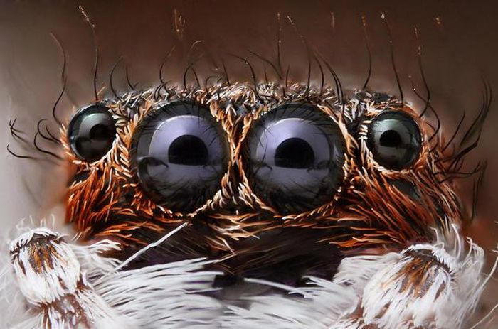 Amazing Macro Photography (45 pics)