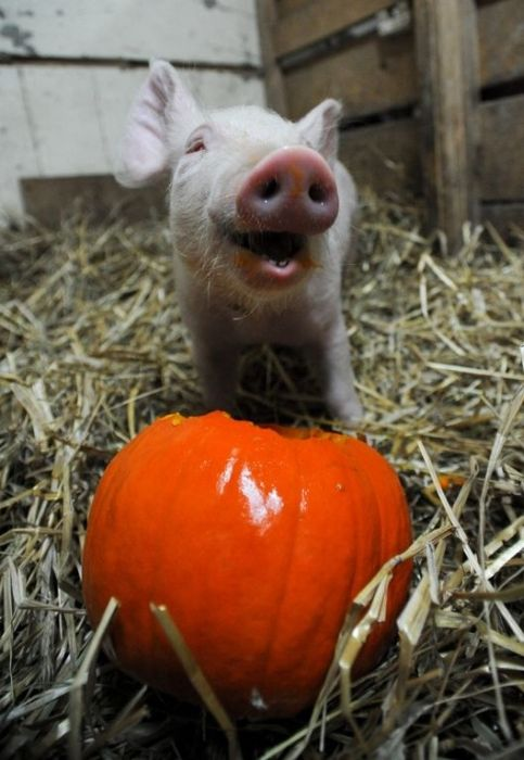 Animals Rescued by Farm Sanctuary (20 pics)