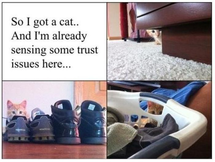 Funny Cat Pictures (23 pics)