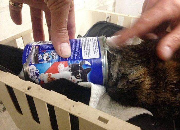 Cat in a Сan (3 pics)