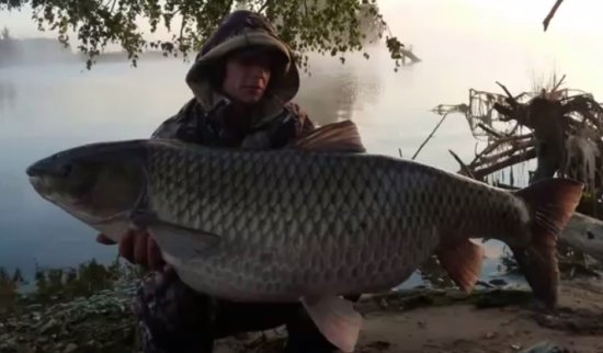 Fishing WIN: Incredible 70 Pounds Grass Carp
