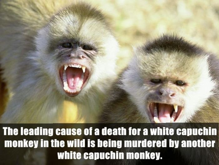 Unbelievable Facts (24 pics)