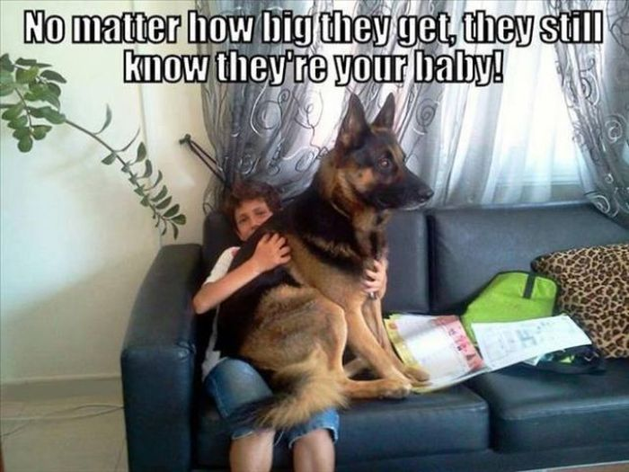 Funny Dog Pictures (21 pics)