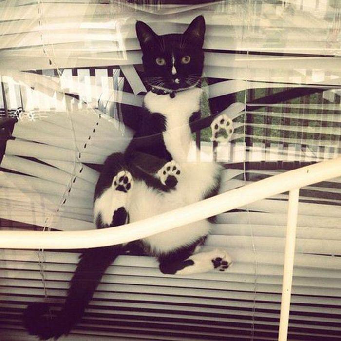 Cats Vs. Blinds (24 pics)