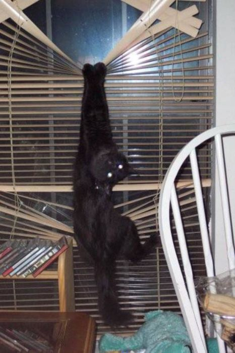 Cats Vs. Blinds (24 pics)