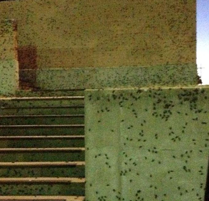 Cricket Swarm Invades Oklahoma City (15 pics + video)