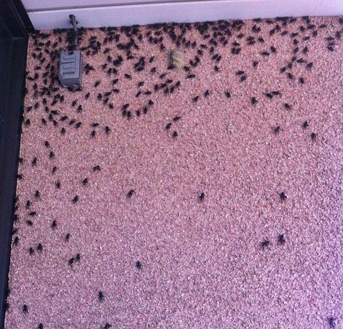 Cricket Swarm Invades Oklahoma City (15 pics + video)