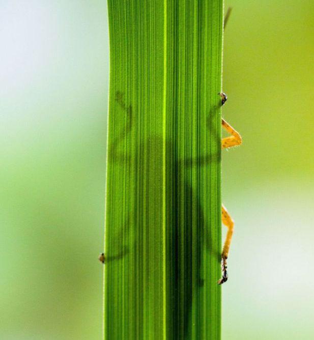 Eating Grasshopper (5 pics)