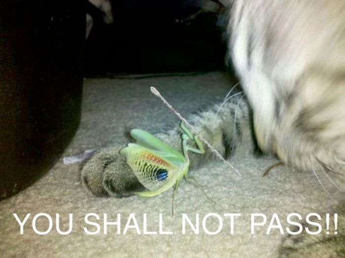 You Do Not Have Permission to Pass… (34 pics)