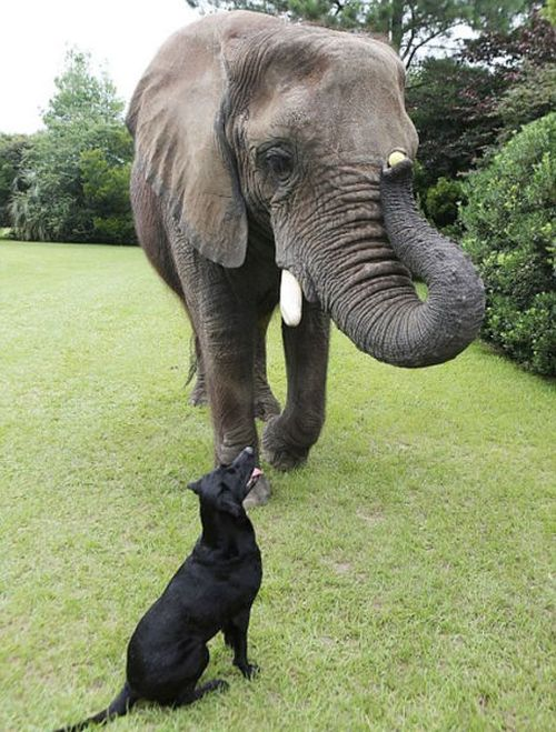 Animal Friends (9 pics)