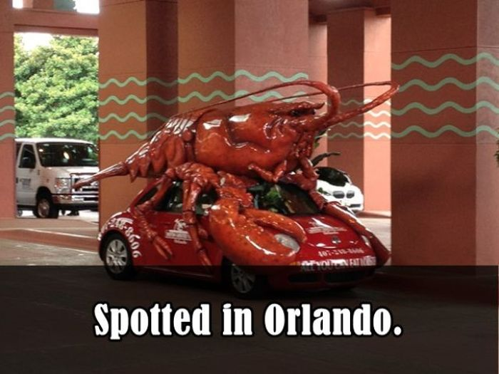 Weird Things Spotted (26 pics)