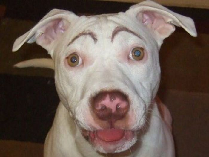 Dogs with Eyebrows (27 pics)