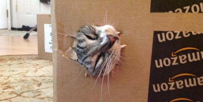 Cats In Boxes (24 pics)