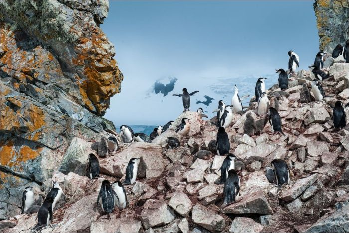 The Best of National Geographic 2013 (31 pics)