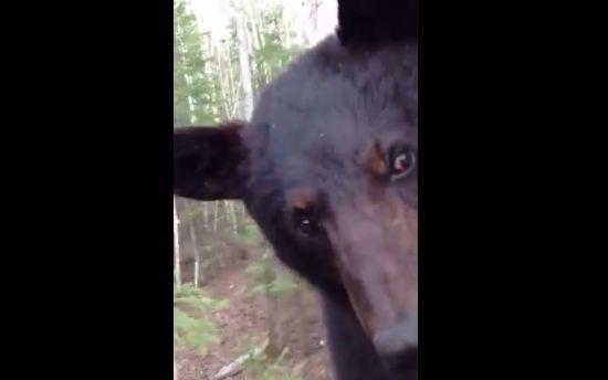 Man Meets Bear Face to Face