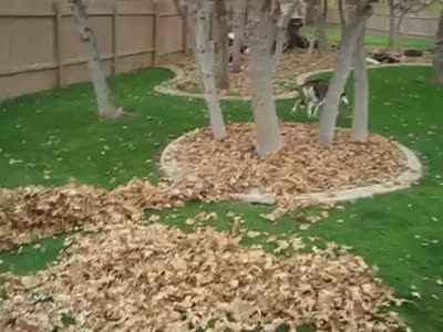 Puppy Enjoys the Leaves