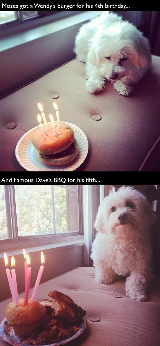 Animal Birthdays (20 pics)